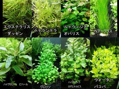 【水草】それぞれなんというものか?わかる方いたらお願いします。