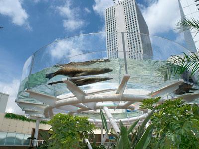 【アクアリウム】東京観光ついでに水族館とその近くの某アクアショップ行ってみた!