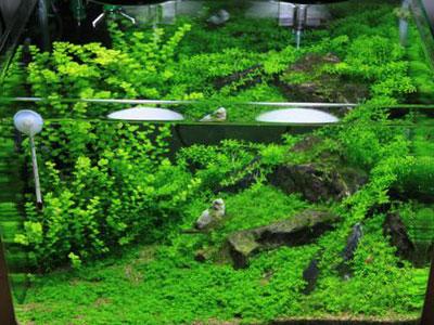 【アクアリウム】頻繁に水換えしたほうが苔が出る?減らしたほうが安定?
