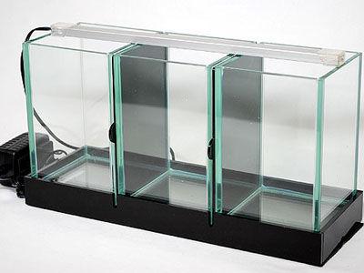 【アクアリウム】みんなのベタ用の水槽ってどれくらい?