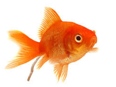【金魚】再び泳ぎだすにはどうすれば・・・