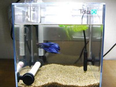 【ベタ】ロカボーイとパワーアップパイプで飼っても大丈夫?水流きつい?