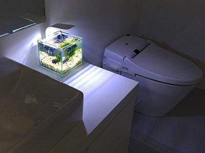 【アクアリウム】何方かトイレに設置しているひとはいらっしゃいませんか?