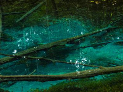 【アクアリウム】水中に池があるように見せるアイデアってなにかない?