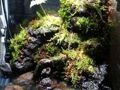 【水草】今流行りのパルダリウム!水上化させやすい水草はある?