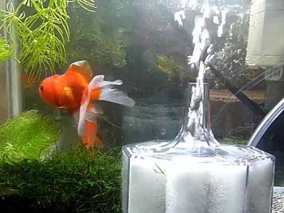 【金魚】濾過フィルターってどれくらいの期間で交換するもの?