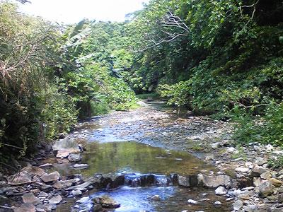 【コリドラス】沖縄辺りの川にコリ放ったら南米みたいに増えねえかなあ夢だなあ