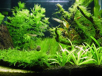 【水草】育ちやすいおすすめの水草教えて