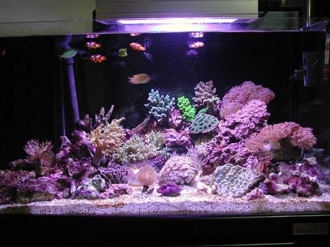 サンゴとサンゴ礁の違いを説明できる奴がほとんどいない件