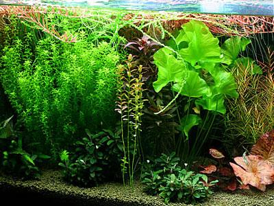 【水草】もっさり水草水槽に無難な液肥ってあるかな?